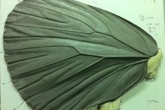 papillon NK  (2)